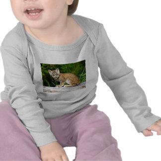 Um gatinho canadense pequeno bonito do lince camisetas
