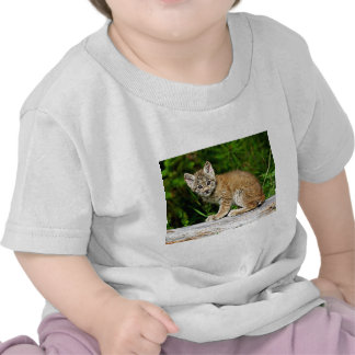 Um gatinho canadense pequeno bonito do lince tshirt