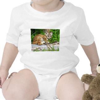 Um gatinho canadense pequeno bonito do lince macacãozinhos para bebê