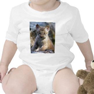 Um gatinho canadense pequeno bonito do lince macacãozinho para bebês