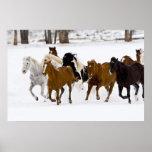 Um inverno cénico de cavalos running no pôsteres