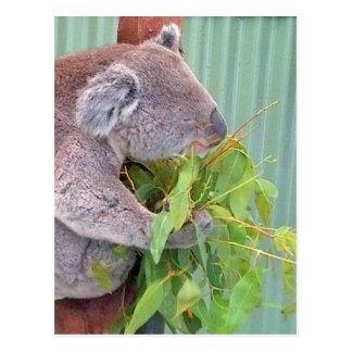 Um Koala no cartão de Austrália