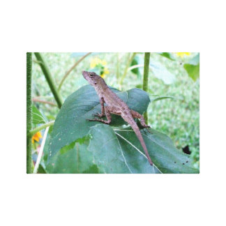 Um lagarto de Brown Anole que senta-se em uma folh Impressão Em Tela Canvas