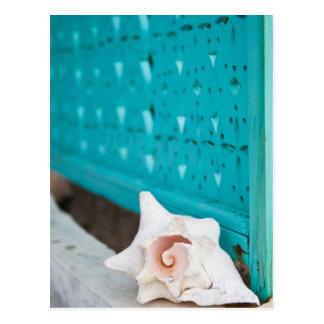 Um mar jamaicano branco e cor-de-rosa Shell Cartão Postal