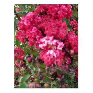 Um Myrtle vermelho bonito Cartão Postal