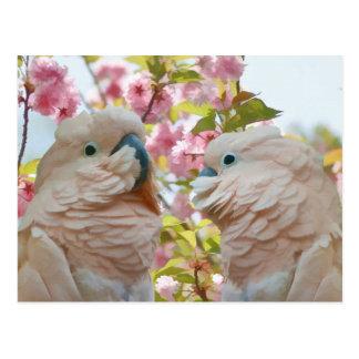 Um par de cartão das flores dos papagaios e do