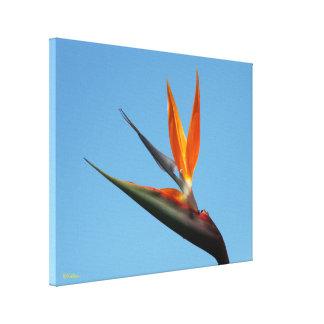 Um pássaro de paraíso voa em sua casa impressão em tela