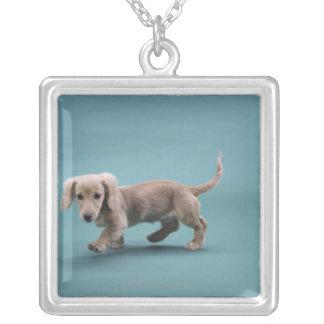 Um passeio pequeno bege do dachshund colar com pendente quadrado