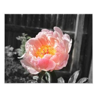 Um pop da cor impressão de foto