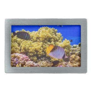 Um recife de corais no Mar Vermelho perto de