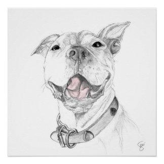 Um sorriso do pitbull poster perfeito