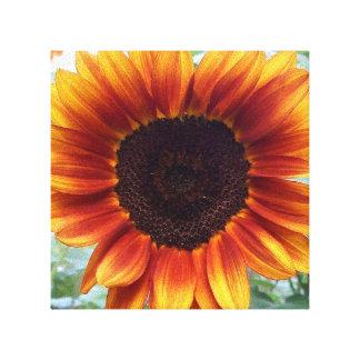 Um Sunburst brilhante de um girassol Impressão Em Tela Canvas