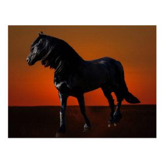 Um traquinagem do por do sol dos cavalos cartão postal