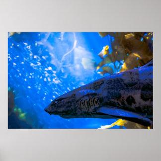 Um tubarão em um poster