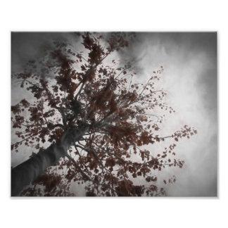 Uma árvore escura da queda com um céu escuro impressão de foto