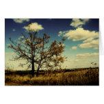 Uma árvore só em um campo seco amarelo cartão