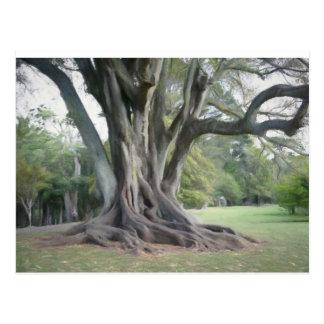 Uma árvore velha cartão postal