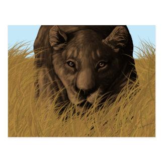 Uma caça da leoa no cartão alto da grama