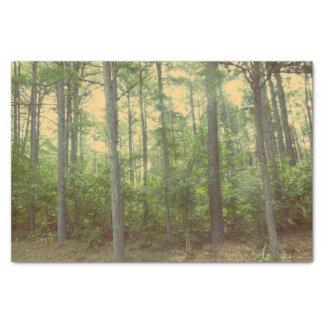 Uma caminhada no lenço de papel das madeiras