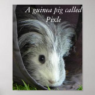 Uma cobaia chamou o poster de Pixle