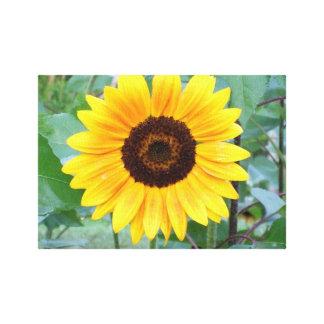Uma flor amarela brilhante e ensolarada do girasso impressão em tela canvas