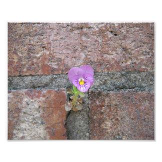 Uma flor do concreto impressão de foto