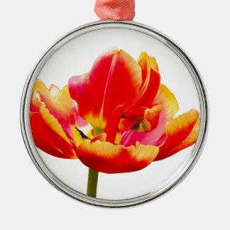 Uma flor vermelha da tulipa no fundo branco ornamento de metal