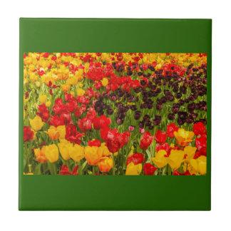 uma florescência das tulipas em um parque no