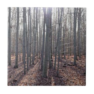 Uma floresta da faia na queda