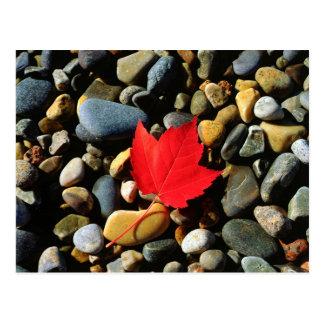 Uma folha de bordo em um fundo da rocha cartão postal