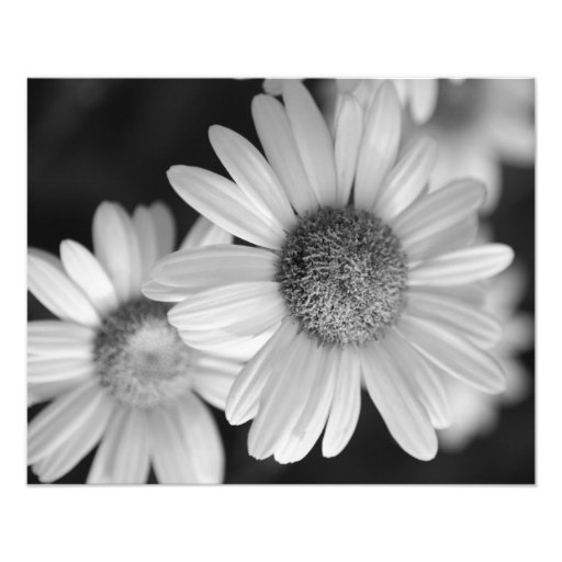 Uma foto preto e branco de uma flor