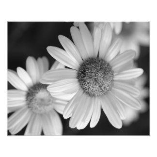 Uma foto preto e branco de uma flor impressão de foto