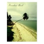 Uma ilha. Pernambuco, Brasil Cartão Postal