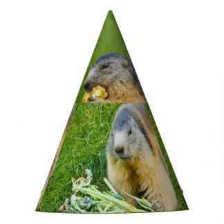 uma marmota sociável no chapéu do partido