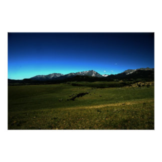 Uma movimentação do gado de Montana Pôsteres