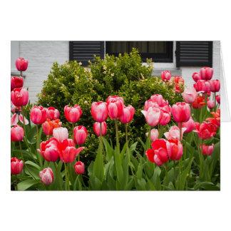 """""""Uma opinião cartão das tulipas"""""""