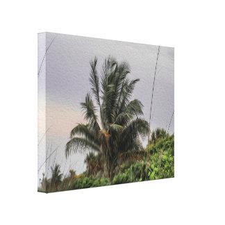 Uma palmeira selvagem que funde no impressão das