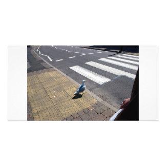 Uma pomba na faixa de travessia cartão com foto