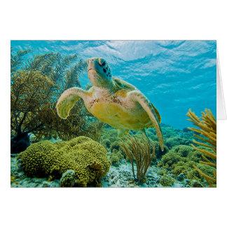 Uma tartaruga verde nos recifes rasos de Bonaire Cartão Comemorativo