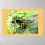 Uma vespa fria posteres