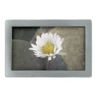 Única flor da margarida branca entre as pedras