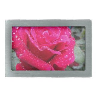Única flor da rosa vermelha com gotas de água