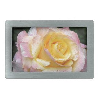 Única flor do rosa amarelo com gotas de água