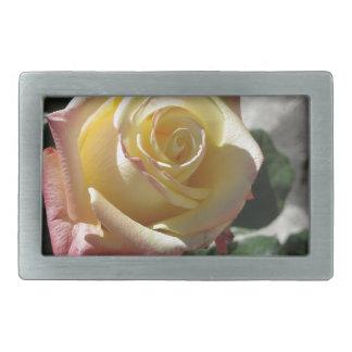 Única flor do rosa amarelo no primavera