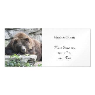 Urso cansado