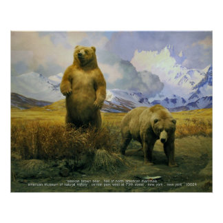 Urso de Alaska Brown Pôster