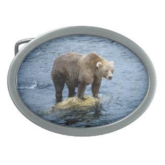 Urso de Brown - coleção americana do mamífero