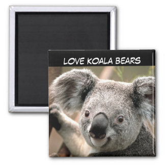 Urso de Koala bonito Imã
