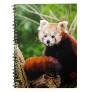 Urso de panda vermelha bonito cadernos espiral