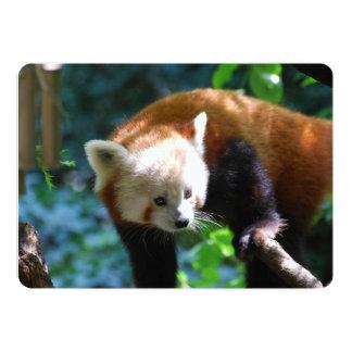 Urso de panda vermelha inquisidor convite personalizado